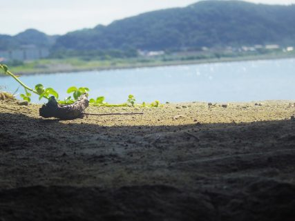 【旅行】南房総をめぐる旅:沖ノ島で遊び、白浜野島崎で海と夕暮れを堪能する