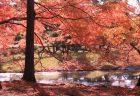 【登山】日和田山、金刀比羅神社からの眺めは疲れもふっとぶ! 埼玉県・物見山〜日和田山登山