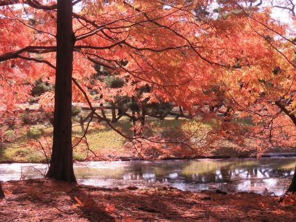 神代植物公園で紅葉狩りしてきました