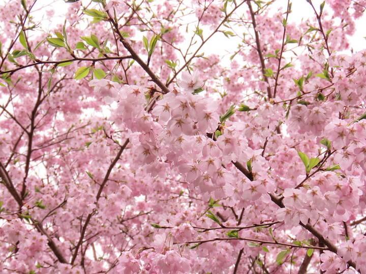 【ハイキング】山登りしながらお花見気分。寄居・鐘撞堂山〜円良田湖を歩いてきました