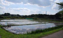 【ウォーキング】広大な田んぼ畑はノスタルジーな気分にも。東浦和駅周辺(見沼田んぼ・大崎公園・さぎ山記念公園)を歩いてきた
