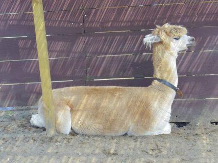 【旅行】南房総をめぐる旅:マザー牧場で動物にいやされる