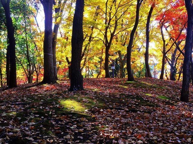 府中の森公園と殿ヶ谷戸庭園の紅葉を堪能してきた