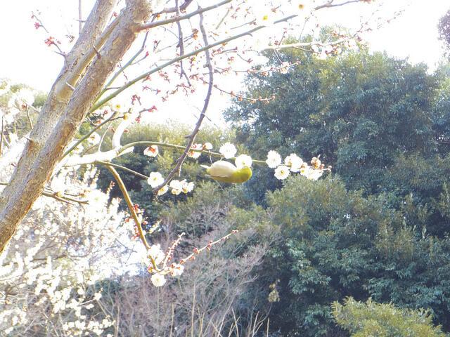 【小石川植物園・新宿御苑】2018年に撮った冬の花写真まとめ