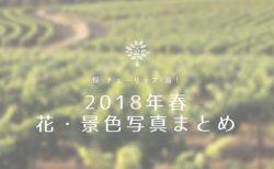 【写真】2018年春の花・景色写真まとめ